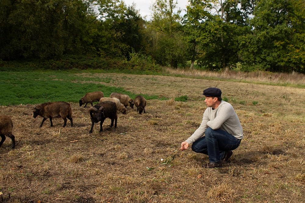 land-sheep-eco-paturage en France